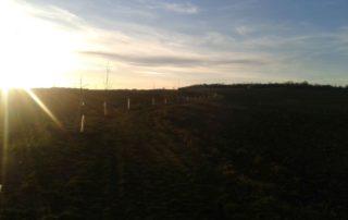 Stromořadí podél polní cesty do Horoměřic