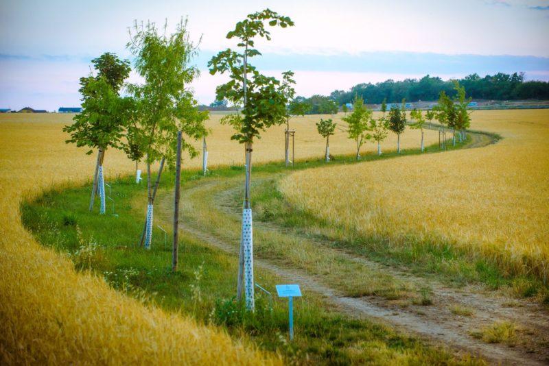 Výsadba stromů